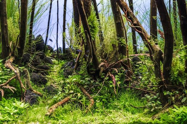 Un bel aquarium planté de plantes tropicales vertes et de poissons tropicaux.