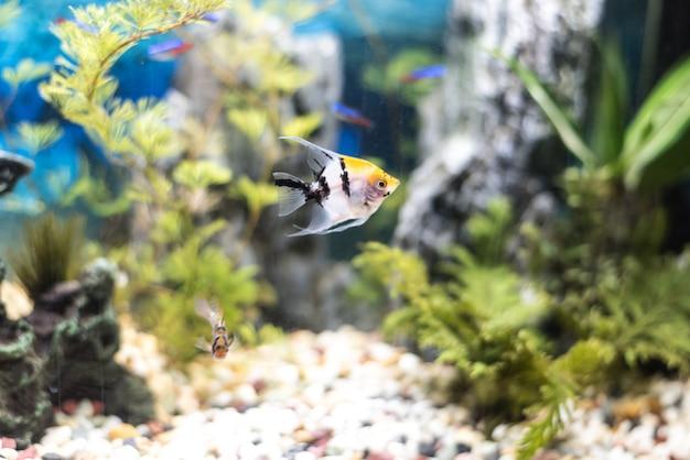 Bel aquarium rempli de poissons