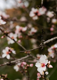 Bel arbre fleurissant à l'extérieur