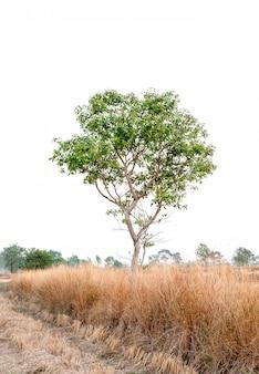 Bel arbre sur fond blanc concept naturel