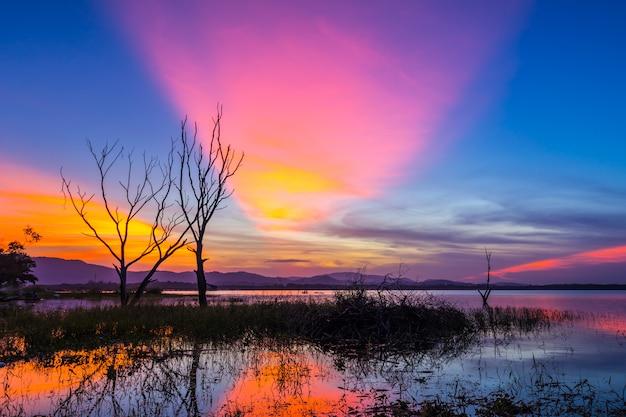 Bel arbre à l'intérieur du réservoir de bang phra au lever du soleil, sriracha, chonburi, thaïlande