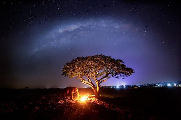 Bel arbre solitaire au milieu du dessert avec des éléphants