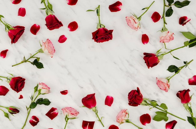 Bel assortiment de roses vue de dessus