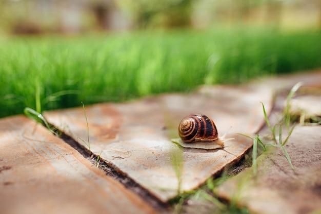 Un Bel Escargot Humide Rampe Le Long D'une Allée De Jardin En Pierre Photo Premium