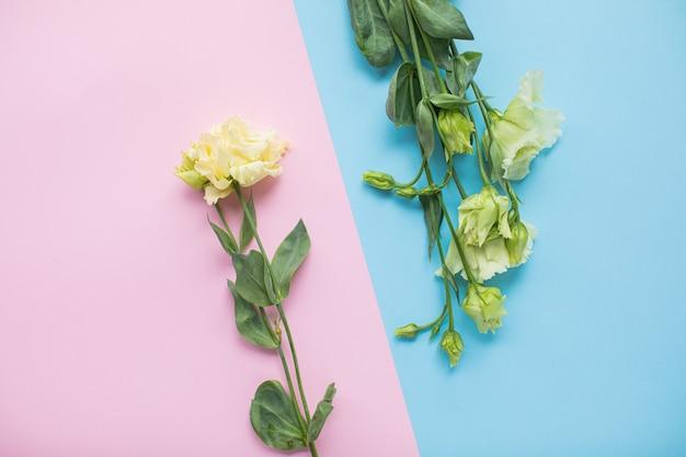 Bel eustoma sur fond de papier multicolore avec espace de copie. printemps, été, fleurs, concept de couleur, journée de la femme.