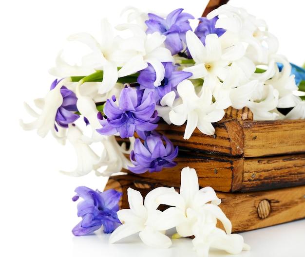Bel hortensia dans un panier en bois isolé sur blanc