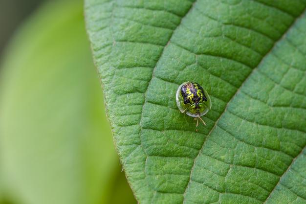 Bel insectes coléoptères dorés se bouchent dans la forêt