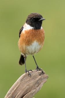 Bel oiseau sauvage dans la nature