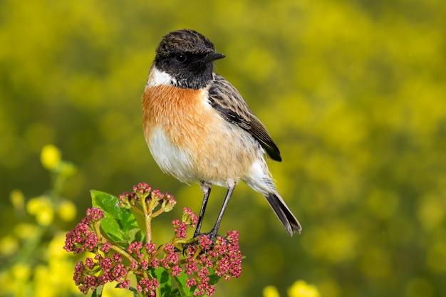 Bel oiseau sauvage perché sur une branche