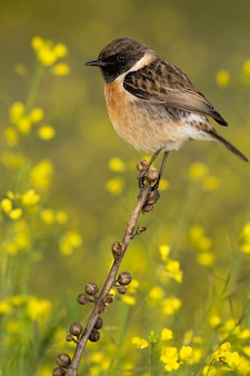 Bel oiseau sauvage