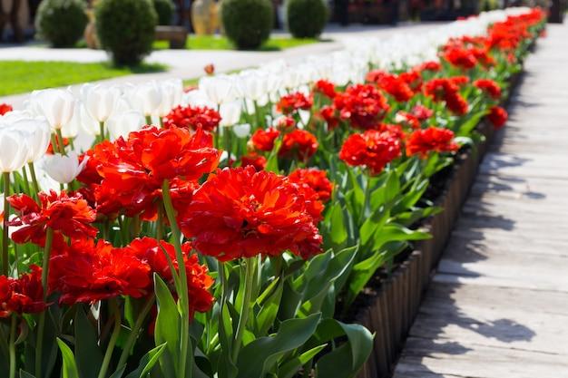 Belle allée de fleurs