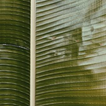 Belle branche de banane tropicale. motif minimaliste et avec filtre de tons verts vintage rétro