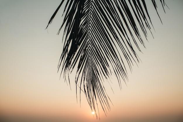 Belle branche de cocotier tropical avec coucher de soleil coloré