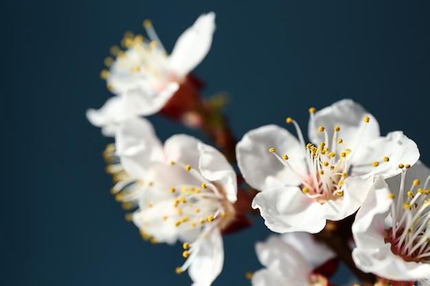 Belle branche fleurie, gros plan