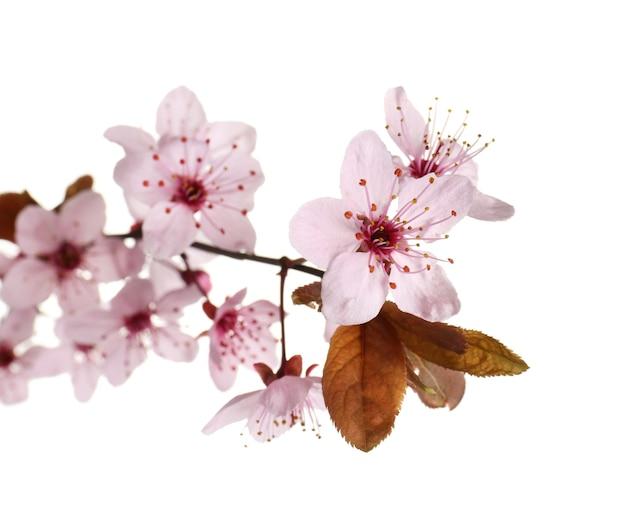 Belle branche fleurie