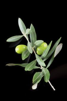 Belle branche d'olive verte mûre isolée sur fond noir, gros plan, pouilles, italie