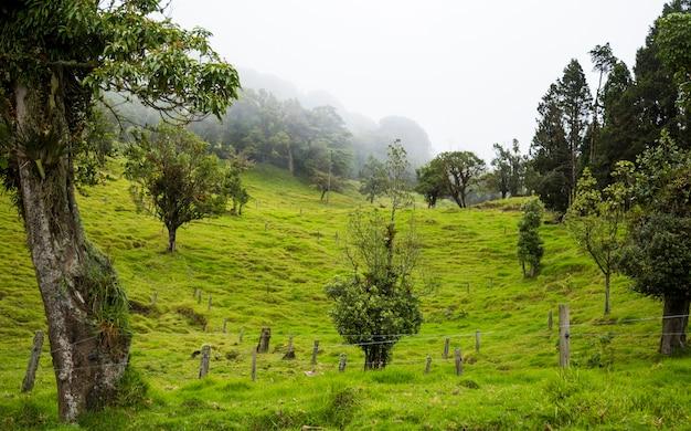 Belle campagne costa-ricaine avec de riches collines verdoyantes
