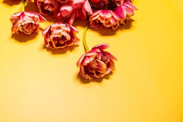 Belle carte postale avec tulipe rouge