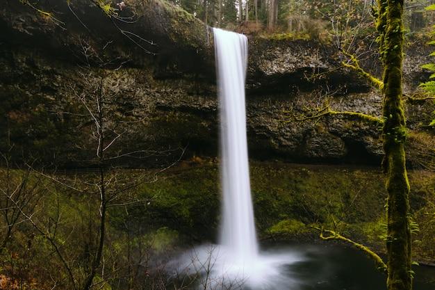 Belle cascade dans une forêt entourée de verdure