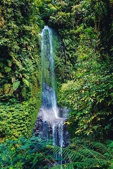 Belle cascade dans la forêt tropicale de bali, indonésie