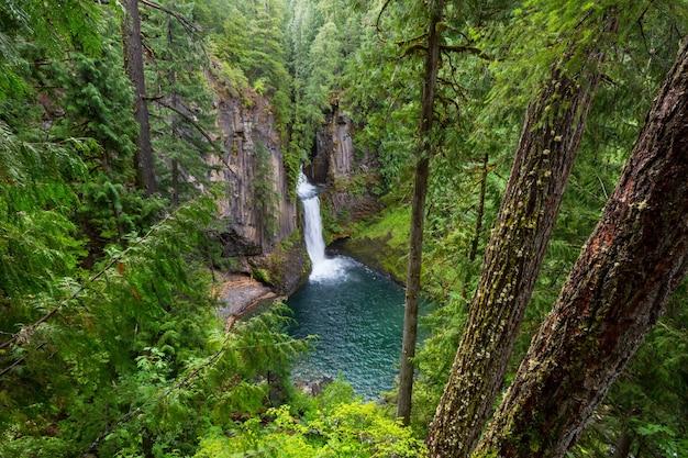Belle cascade dans la forêt verte, oregon, usa.