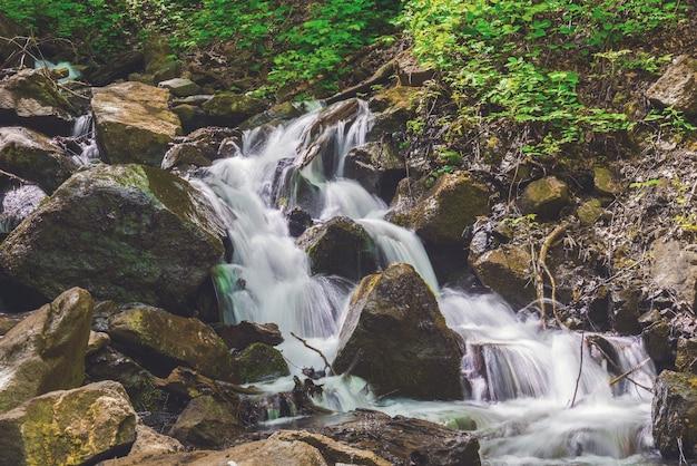 Belle cascade dans la forêt verte
