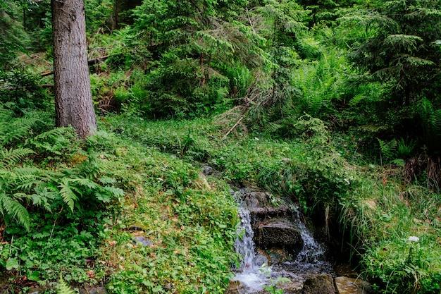 Belle cascade de montagne avec des arbres en arrière-plan