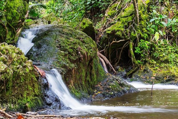 Belle cascade tropicale à hawaii