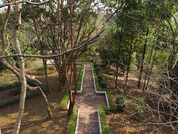 Belle chaussée de parc de forêt tropicale ou chemin