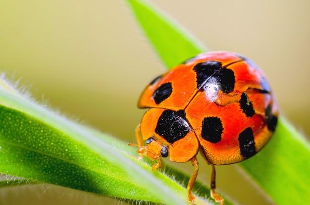 Belle coccinelle bug sur une feuille chaude journée de printemps