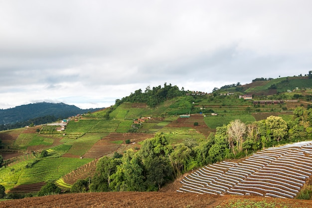 Belle colline de chou. à la montagne de monjam à chiangmai, en thaïlande.