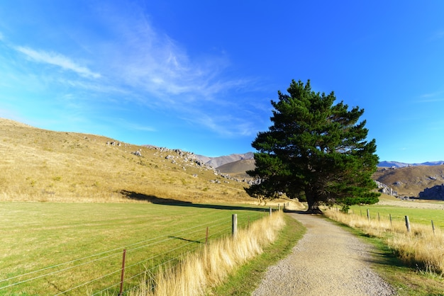 Belle colline du château le matin, entre darfield et arthur's pass, île du sud de la nouvelle-zélande