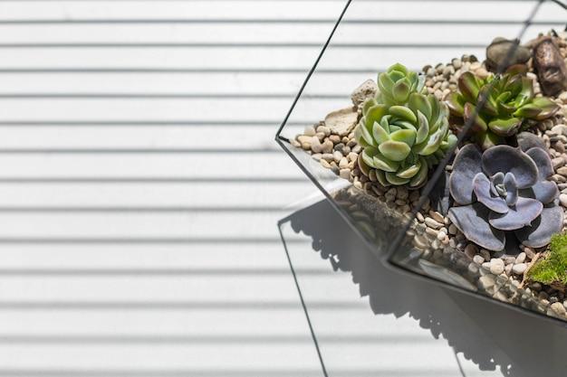 Belle composition d'art en fleurs succulentes dans un florarium en verre au soleil avec fond