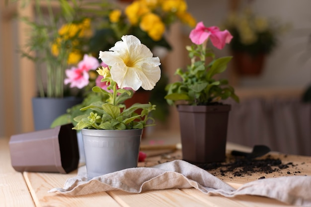 Belle composition de fleurs sur table
