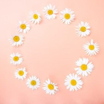 Belle composition florale avec des fleurs de camomille fleurs sauvages couleur douce et légère