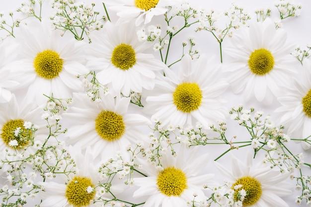 Belle composition de marguerites et de fleurs de souffle de bébé