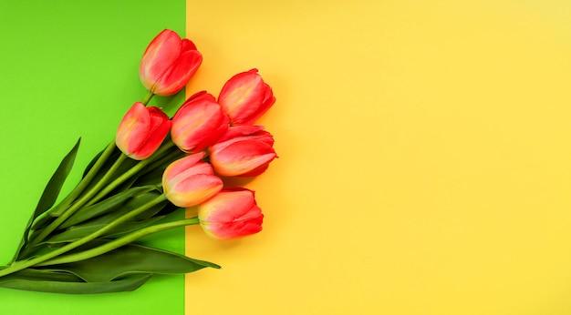 Belle composition de tulipes printanières. fleurs de tulipes rouges sur fond vert.
