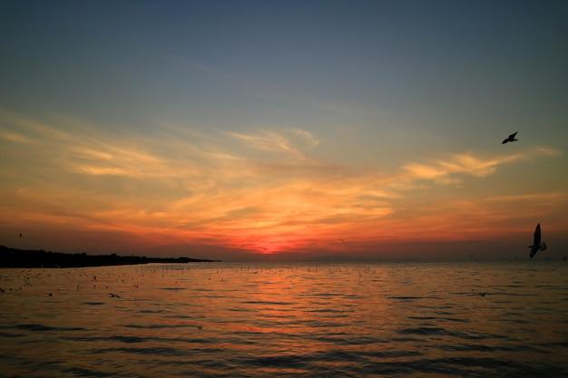 Belle couleur bleue et orange du ciel de lever de soleil avec la silhouette de nombreuses mouettes