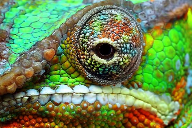 Belle couleur d'yeux caméléon