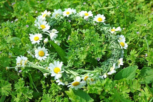 Belle couronne de marguerite sur un champ vert