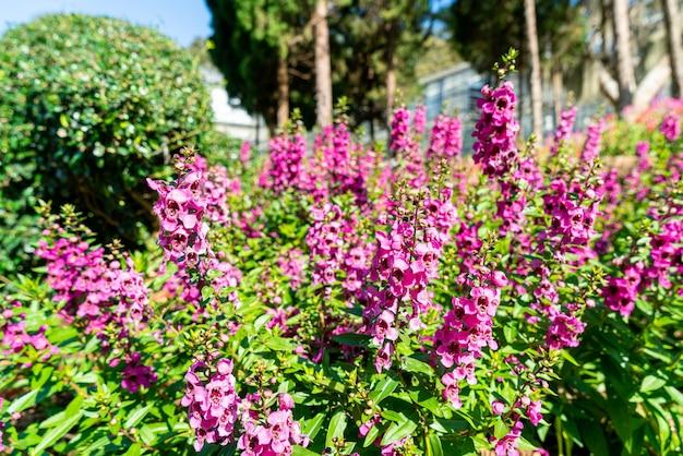 Belle décoration florale dans le jardin potager