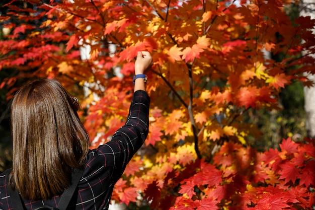 Une belle avec un érable rouge en automne avec un arrière-plan flou