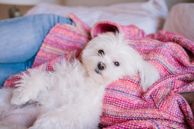 Belle femme allongée sur le lit avec son mignon chien maltais