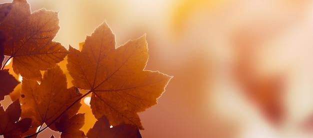 Belle feuille d'automne sur l'automne fond rouge ensoleillé lumière du jour tonification horizontale