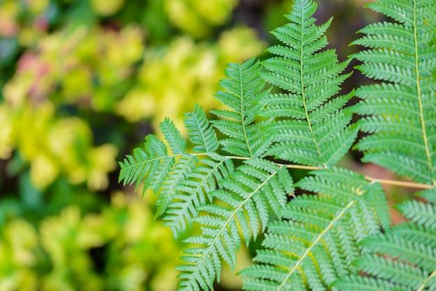 Belle feuille de fougère verte