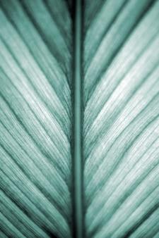 Belle feuille texture fond closeup