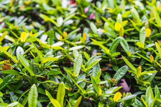Belle feuille verte de fleur d'épi