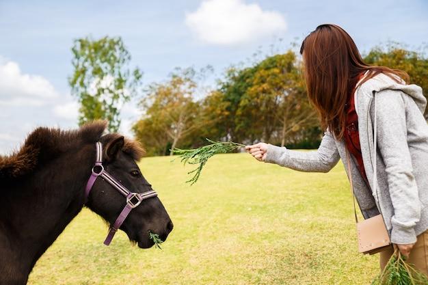 Belle fille nourrir un cheval. femme jouant avec des chevaux plaisir en plein air pour fille.