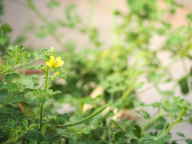 Belle fleur avec un arrière-plan flou