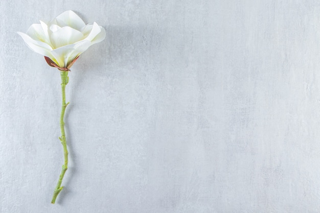 Belle fleur blanche parfumée, sur fond blanc.